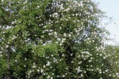 fiori-enrico-2